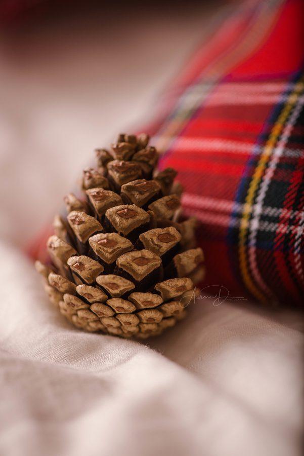 Pomme de pin - Décoratrice pour séance photo de Noël sur Tours